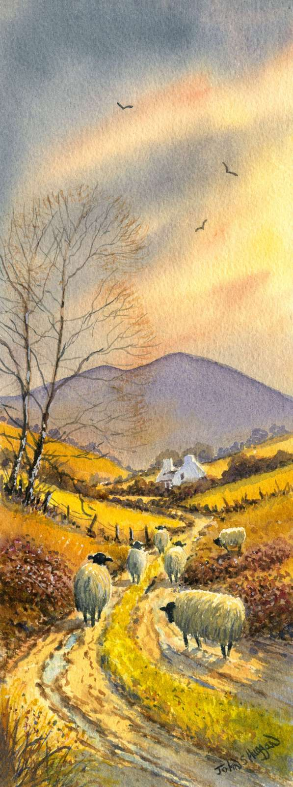 Sheep In The Sperrins Print (LNG013)